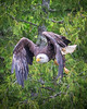 20160606-082252 eagle