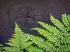 20140611-130412 Wisconsin flora