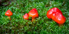 Toadstools and Mosses