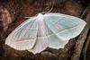 20160705-171531 WI - Moth