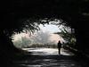 Tunnel of Solitude