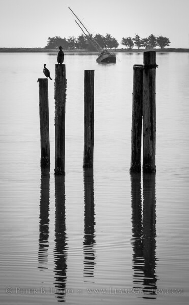 Birds on abandoned pilings gaze at the wreck of the Napi listing in low tide in Bodega Bay on the Sonoma County coast.