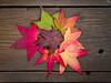 Sweetgum Fall Color