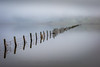 Flooded fence line in Marin County