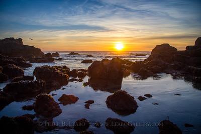 Sonoma Coast Sunset