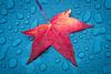 20141203-175010 Leaf in rain