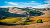 Marin County Vineyard