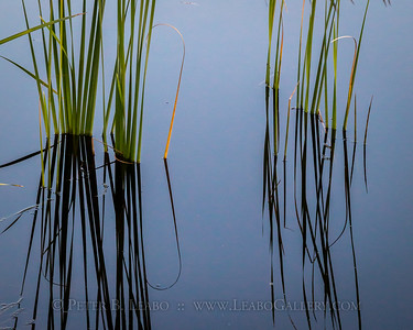 Reflections of a Texas Marsh
