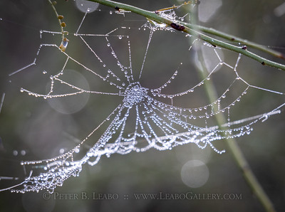 Spider's Pearls
