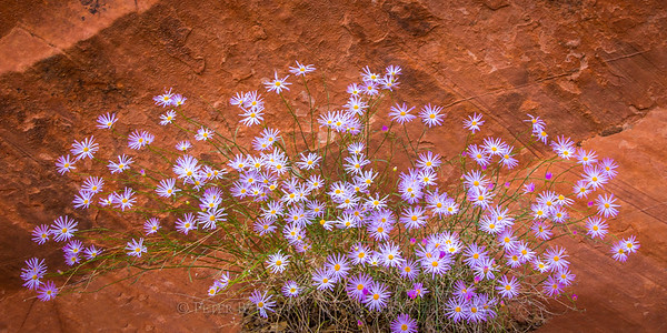 Red Rocks and Wildflowers