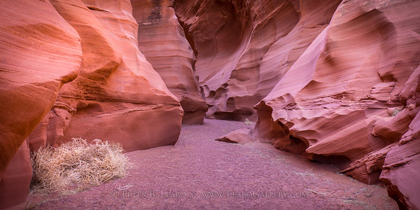 Tumbleweed Canyon