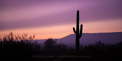 Saguaro Sunrise