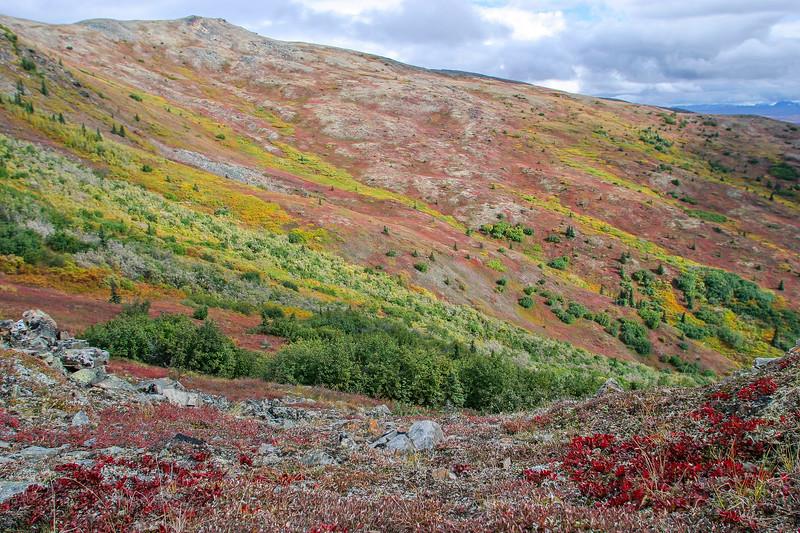 Fall Tundra Colors on the Kantishna Hills