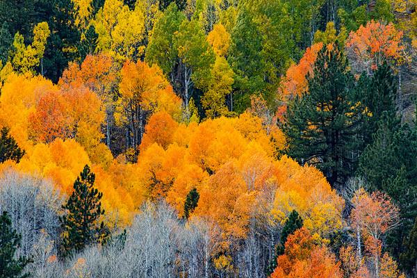 Central Sierras