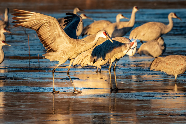 Hey stupid...you're a BIRD.  What are you doing trying to walk on ice?