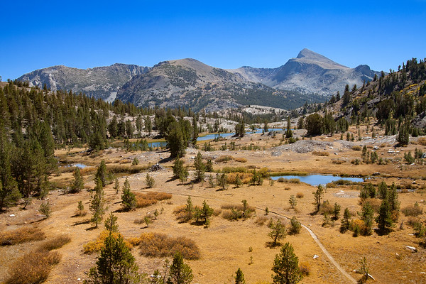 Golden Colors of Fall above Tioga Pass