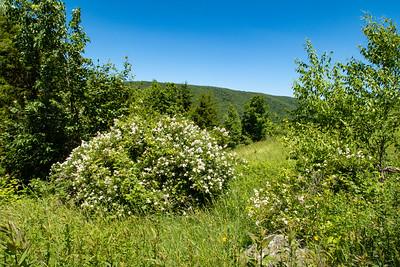 High Meadows