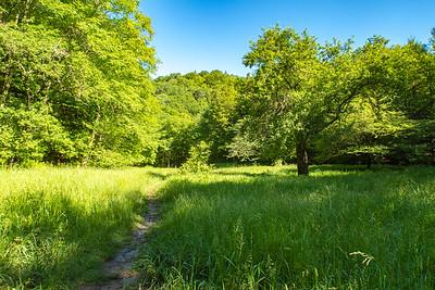 Judy Springs Trail