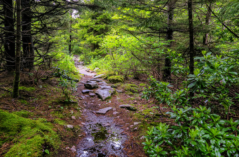 Huckleberry Trail