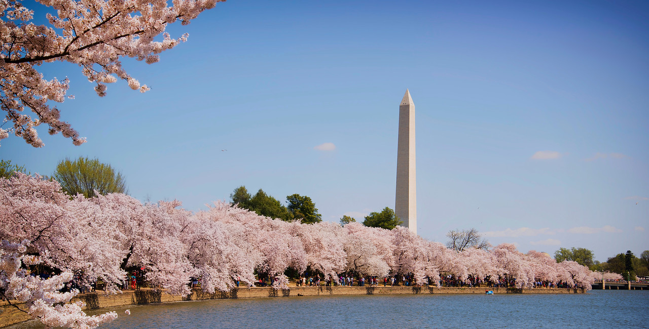 Washington DC Cherry Blossoms 2