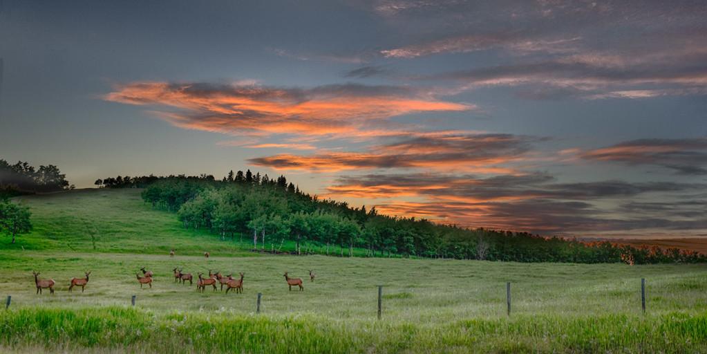 Elk Sunset Pano