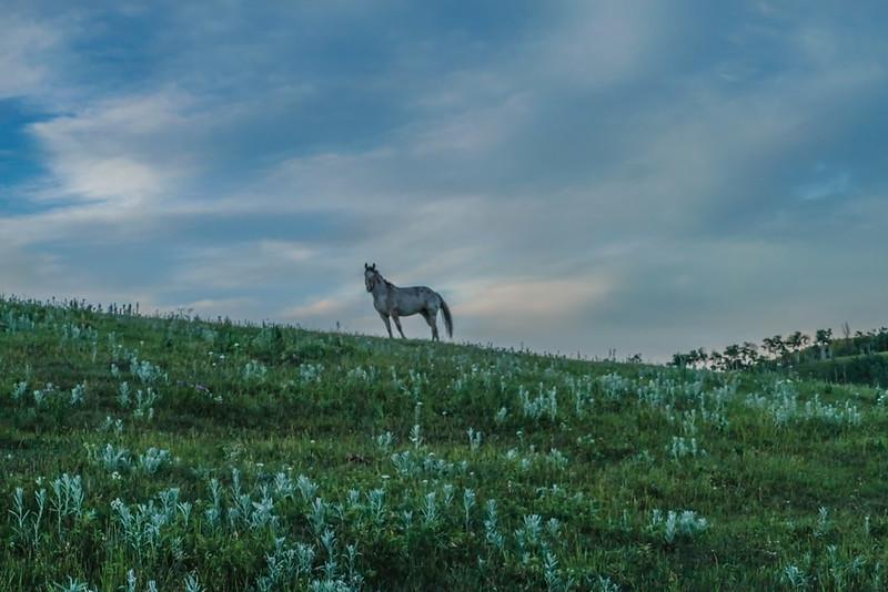 horse (24 of 25)-Edit-2