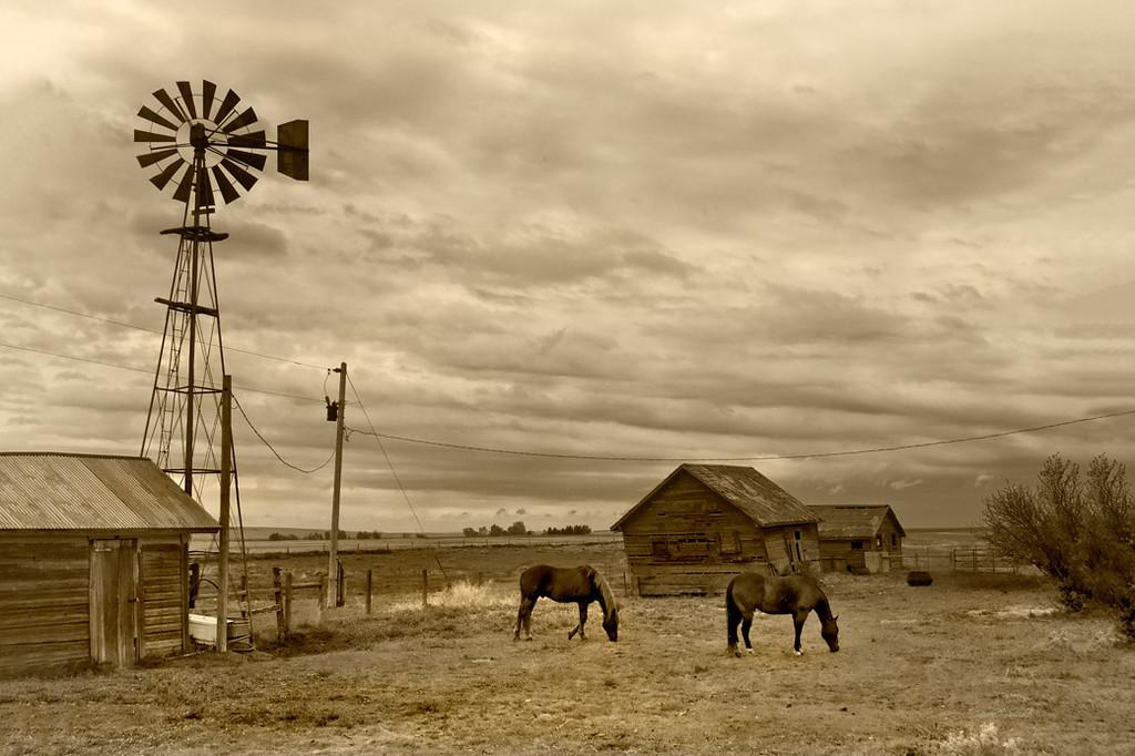 82908 Windmill Horses 12x16 5