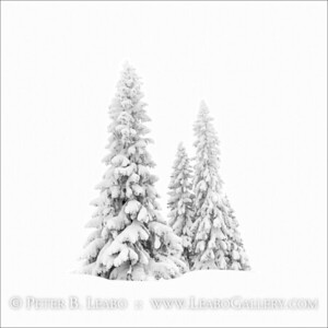 Trees in Whiteout
