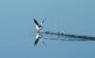 Elkhorn Slough -Landing #2