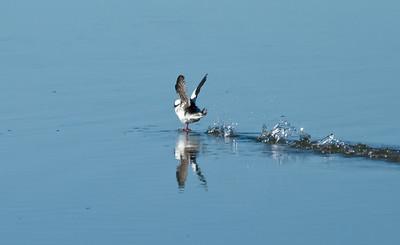 Elkhorn Slough Landing #1
