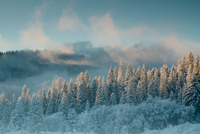 Snow, Trees and Clouds.  Wawona