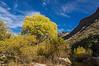 Sabino Creek Splendor, Tucson, Arizona