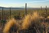 Morning light in the Tucson desert