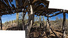 Partial crop, two frame photomerge, ramada in the Desert Museum