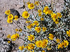 D085-2009  <br /> <br /> Cholla Cactus Garden, Pinto Basin Road<br /> Joshua Tree National Park, California<br /> March 26, 2009