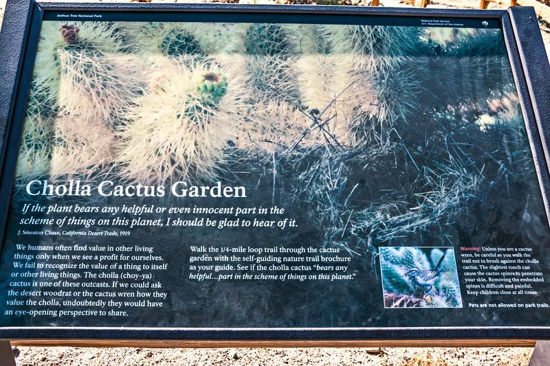D085-2009  Interpretive sign<br /> <br /> Cholla Cactus Garden, Pinto Basin Road<br /> Joshua Tree National Park, California<br /> March 26, 2009