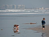 Self-absorbed.<br /> <br /> Silver Strand State Beach, Coronado Island, CA.