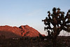 The first light of the morning hits the eastward facing hills, while the foreground still lies in shadow.<br /> <br /> Joshua Tree, California.
