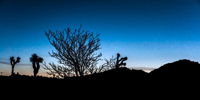 Joshua Tree sunrises - 2009