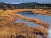 Meadowlark Prairie in golden light
