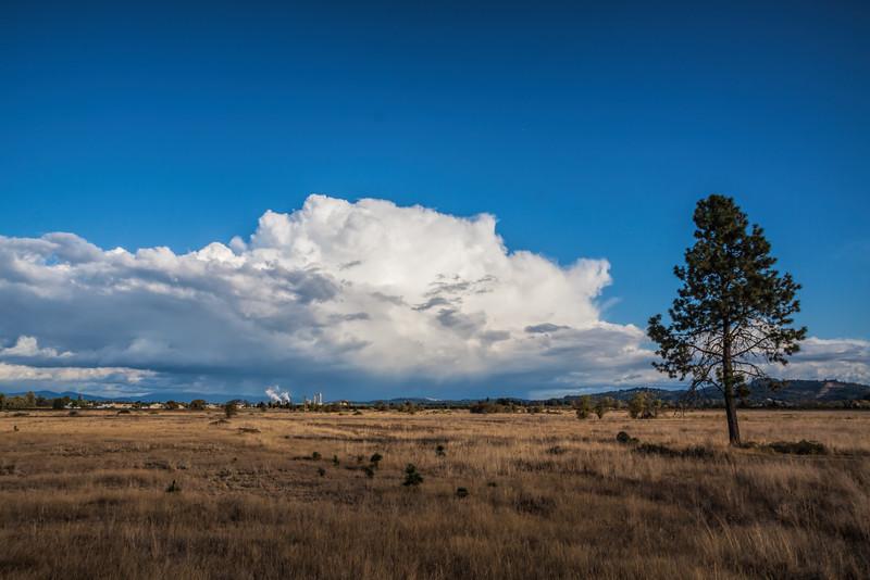Late afternoon at Meadowlark Prairie, Eugene