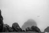 Gulls in fog.<br /> <br /> Harris Beach State Park, Brookings, Oregon.