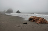 Beach rockscape.<br /> <br /> Harris Beach State Park, Brookings, Oregon.