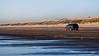 Cruising beyond the tide line.  Warrenton, OR