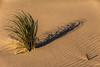 Sandscape with critter track.  Warrenton, Oregon