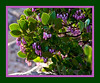 A blooming shrub, possibly salal.  (Filtered via posterize and poster edges because of the soft focus.)<br /> <br /> Seen at the Checkerboard Mesa main overlook (east end of the Zion - Mount Carmel highway).<br /> <br /> Zion National Park,<br /> April 2008