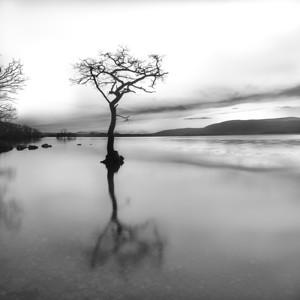 High Key Lonely Tree