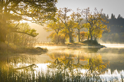 Loch Achray morning trees