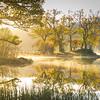 Loch Achray morning trees