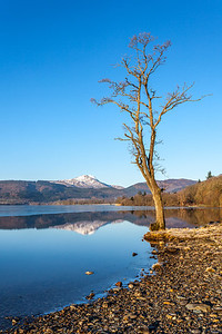 Loch Ard Framed with Tree - 8703